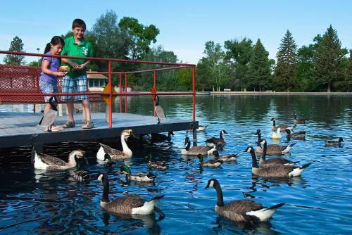 Children feed ducks