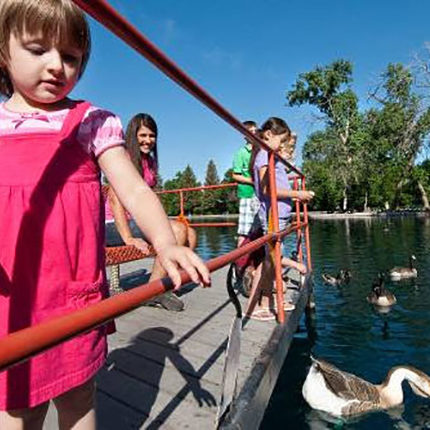 A young girl in a pink dress feeds geese in a local pond in Great Falls, MT